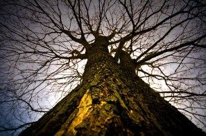 The Tree of Knowledge: Evidence of God's gift of freewill to us