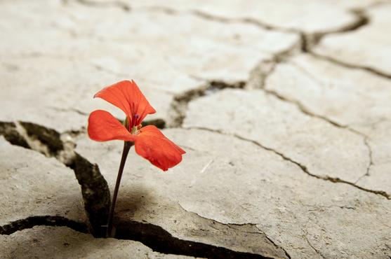 Image result for hardship