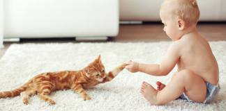 Is It Safe For Your Baby To Be Around Your Cat?