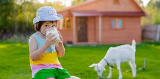 Why Goat's Milk for Toddlers Is a Safer and Better Choice?