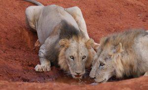 Photo Gallery Safari Kenya Watamu 2020 18