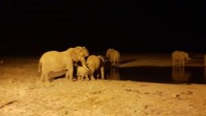 Photo Gallery Safari Kenya Watamu 2020 23