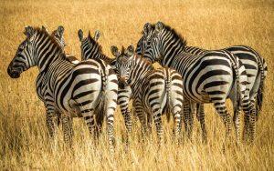 Photo Gallery Safari Kenya Watamu 2020 11