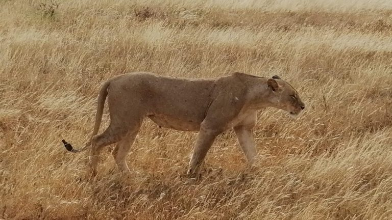 Tsavo-East-Safari-3-1.jpg