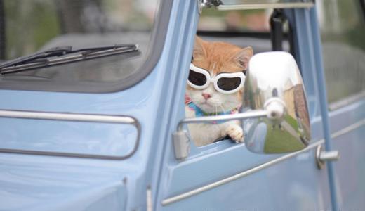 猫の日2017イベントin東京やグッズは?スイーツやおもしろ猫動画も!