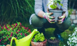 avoid back pain while gardening