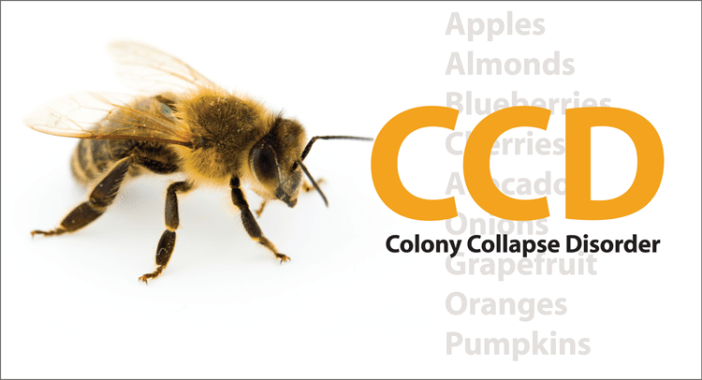 CCD - Colony Collapse Disorder- Kinney Brothers Publishing