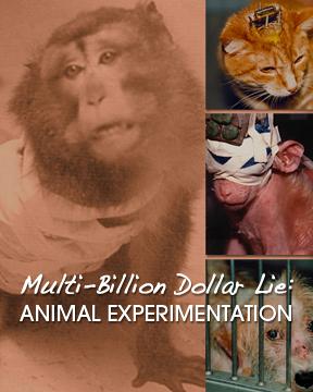 10/25/12: THE MULTI-BILLION DOLLAR LIE