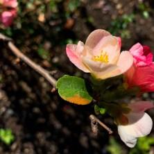 成子天神の境内に咲いていた花