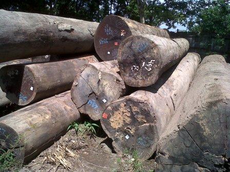 Gelondong kayu