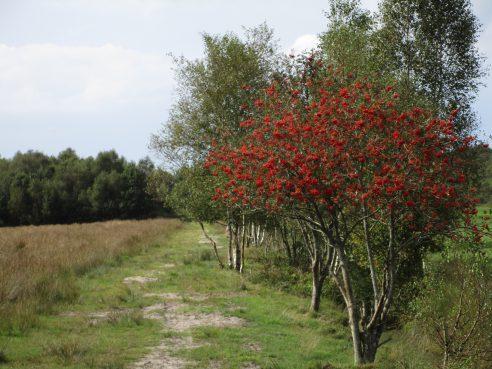 Wanderritt nach Großheide 03.09.2016