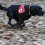Sporthund-SanH