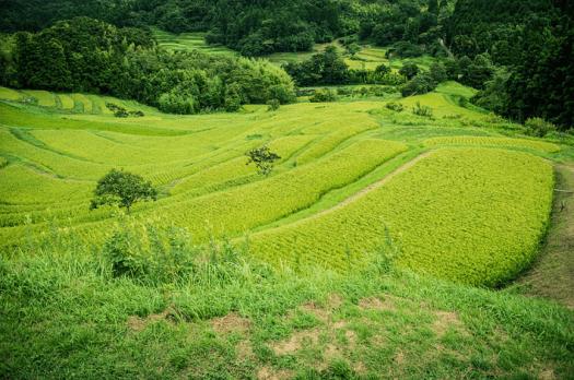satoyama5