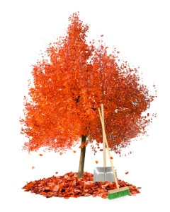 Photo of autumn tree with leaf heaps and cleaning tools isolated on white