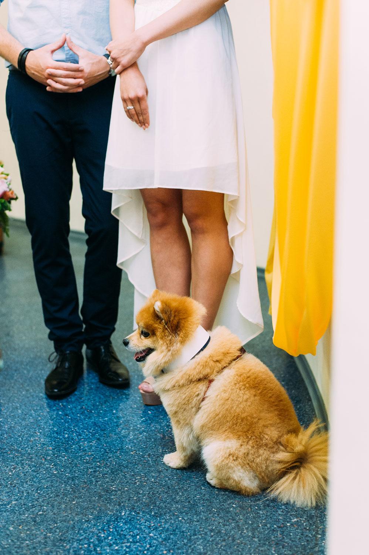 Свадебная фотосессия в Киеве с собачкой