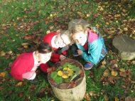 autumn leaves 014