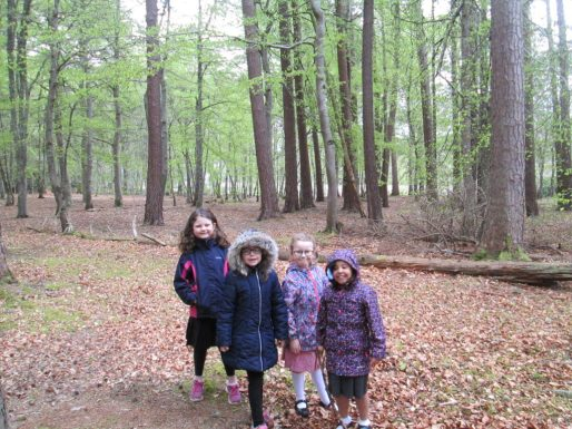 outdoor learning in the woods 052