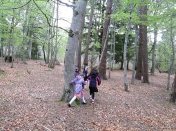outdoor learning in the woods 060