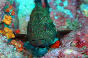 A Costa Rico Underwater Beauty