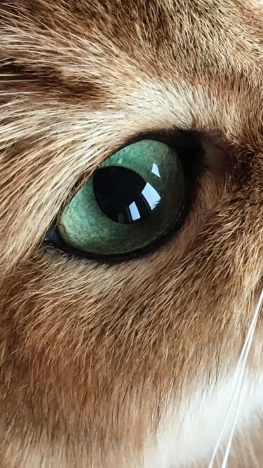 titus-eye