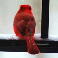 Kırmızı resimler