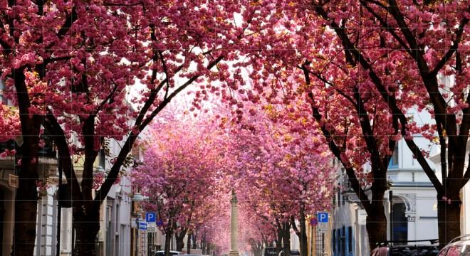 kirschbluete bonn heerstrasse