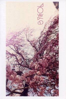 cherry blossoms message