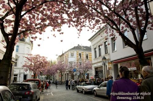 Kirschblütenliveticker-Donnerstag-21.4.16nst