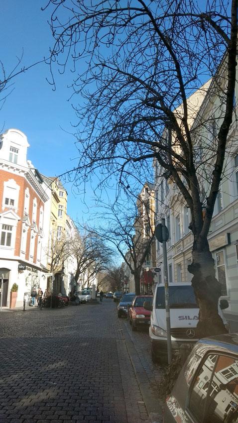 samstag-16.2.19-kirschbluete-heerstrasse-bonn