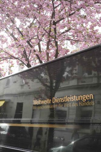 2014-wett-S.Oessenich-Kirschblüte-2v3