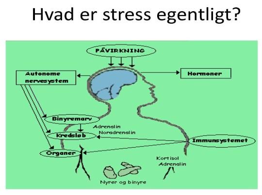 Symptomer på stress undersøges hos stress coach på Djursland