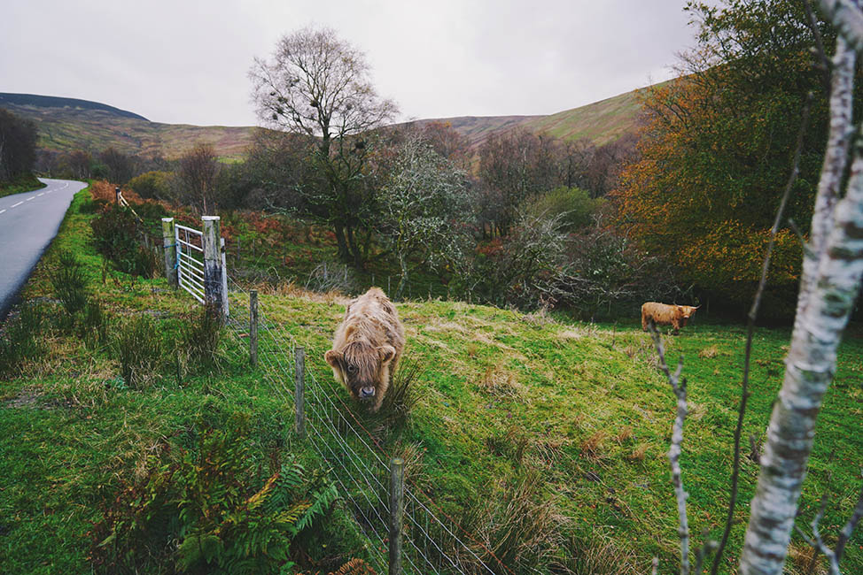 13 Photos from Fall in Scotland
