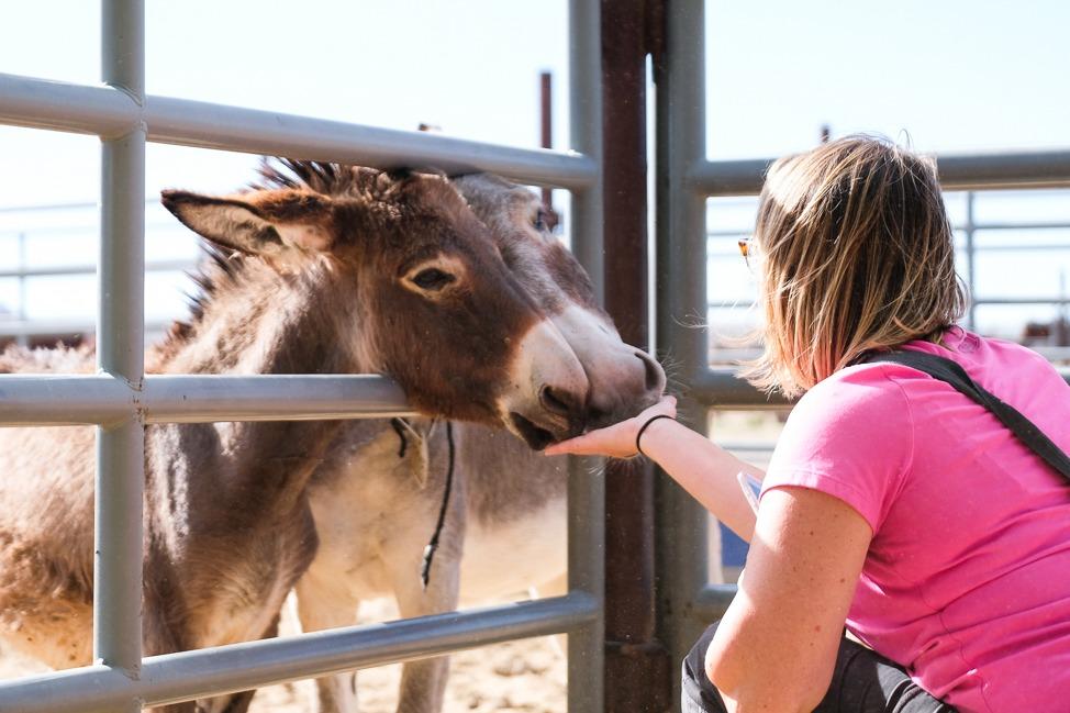 Visiting Deserts – One of California's 8 Rural Regions