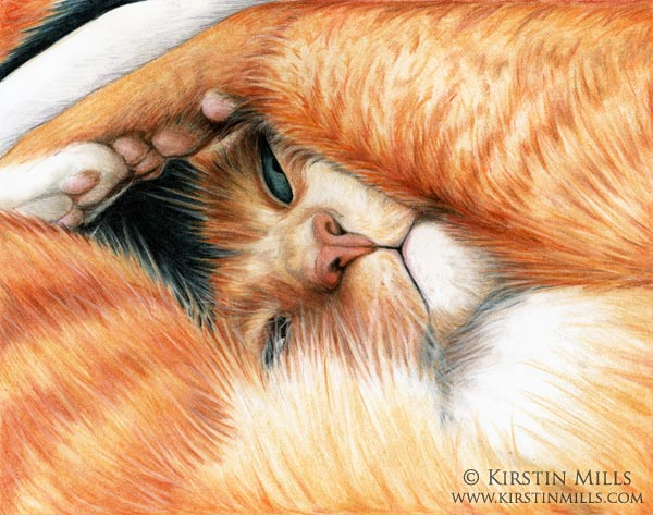 Peekaboo Cat Art by Kirstin Mills, Fairy Tales, Fairies and Fantasy Art and Illustration