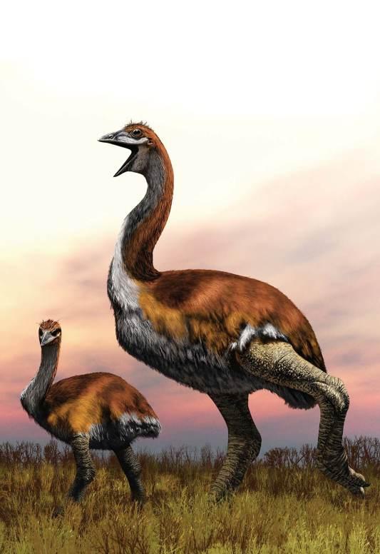 বন্ধুরা! আজ তোমাদের জানাবো পৃথিবীর সবচেয়ে বড় পাখি সম্পর্কে।