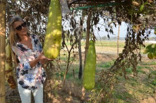 Jaja dit zijn groente van eigen kweek in Kishor Nagar, Simonne stond er stomverbaasd naar te kijken.