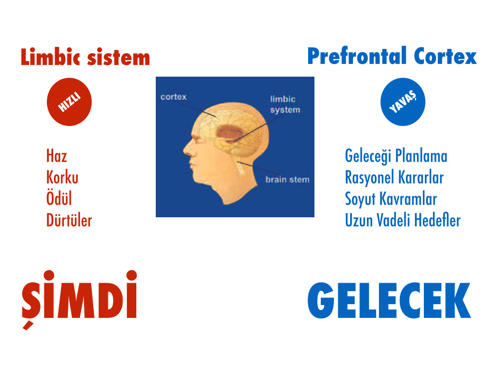 limbik vs profrontal.001