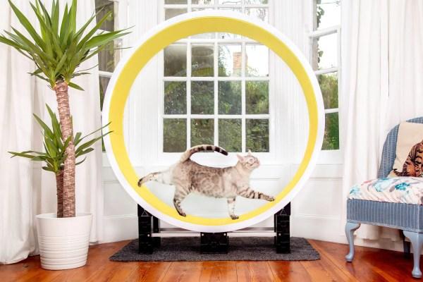 Ferris juoksupyörä keltainen
