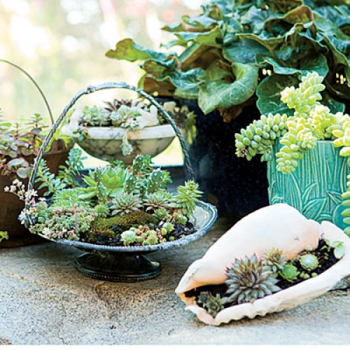 20 Cute Indoor Succulent Plant Decor Ideas To Beautify