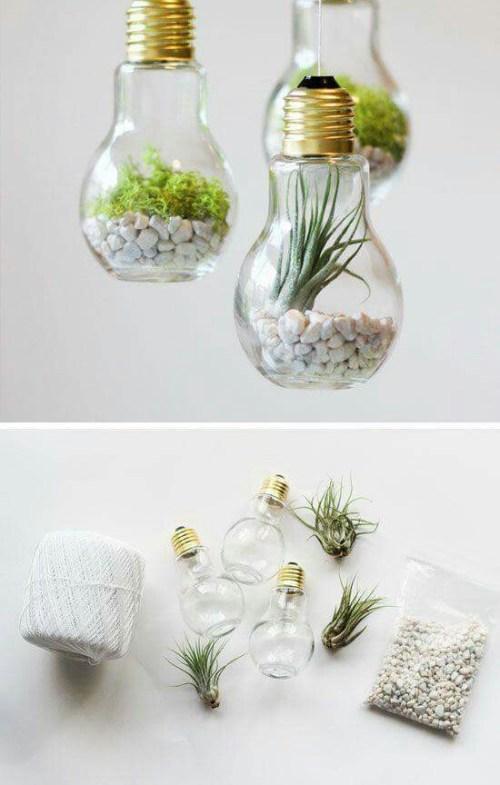 succulent plant decor idea 6