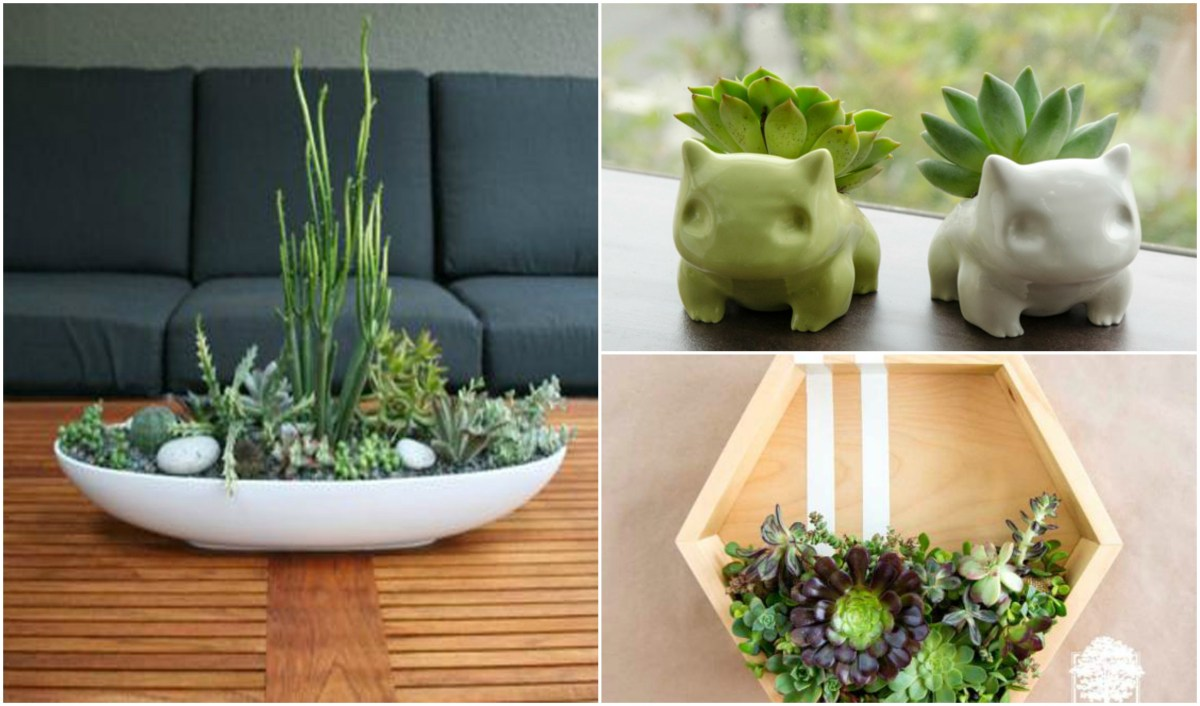 20 Cute Indoor Succulent Plant Decor Ideas To Beautify Your Home