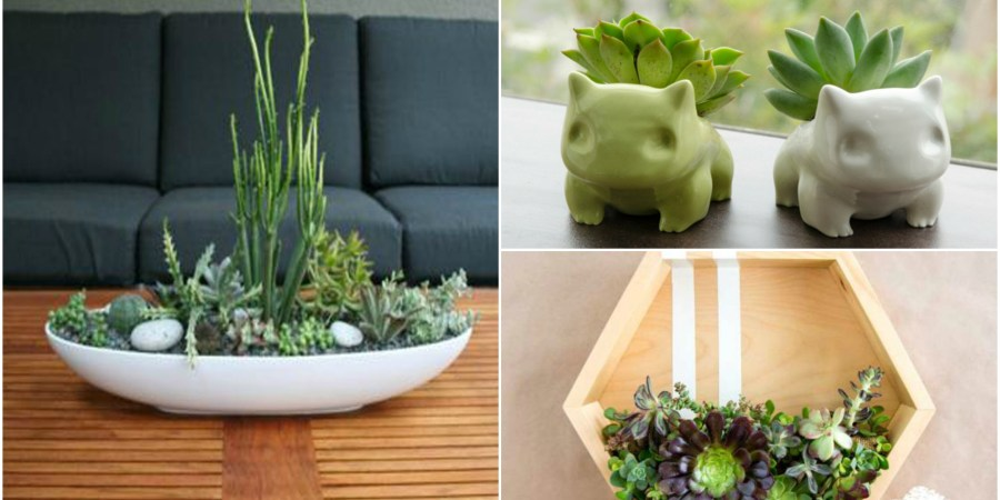 succulent plant decor idea cover