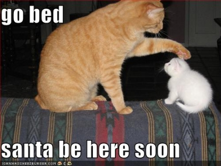 funny-pictures-kitten-bed-santa