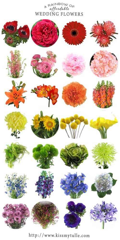 For those interested in filling their wedding with all the colors, may I present to you, a rainbow of affordable wedding flowers!