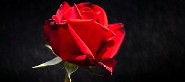 [Photolog] 2011年5月 新宿御苑の薔薇
