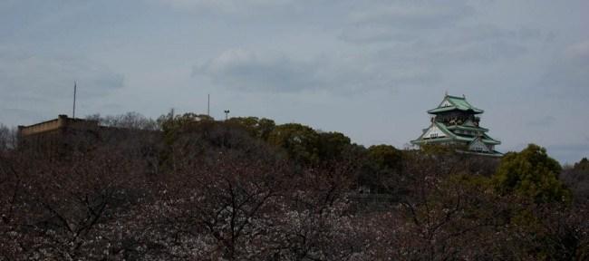 [Photolog] 2013年3月 大阪城公園の桜