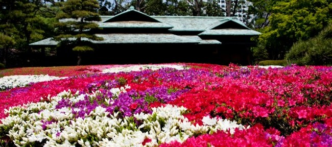 [Photolog] 2011年4月 皇居東御苑の久留米躑躅