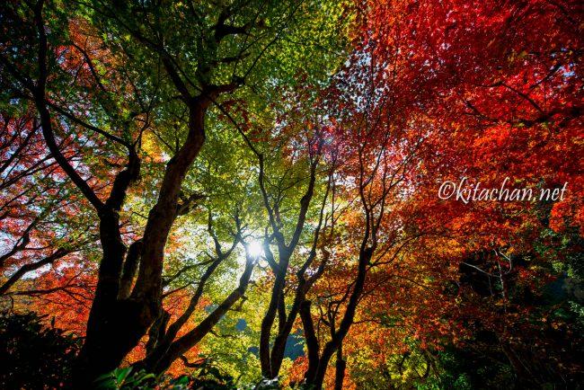 [Photolog] 2016年11月 京都の紅葉