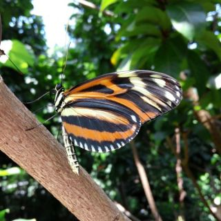 Cockrell Butterfly Center {Houston, Texas}