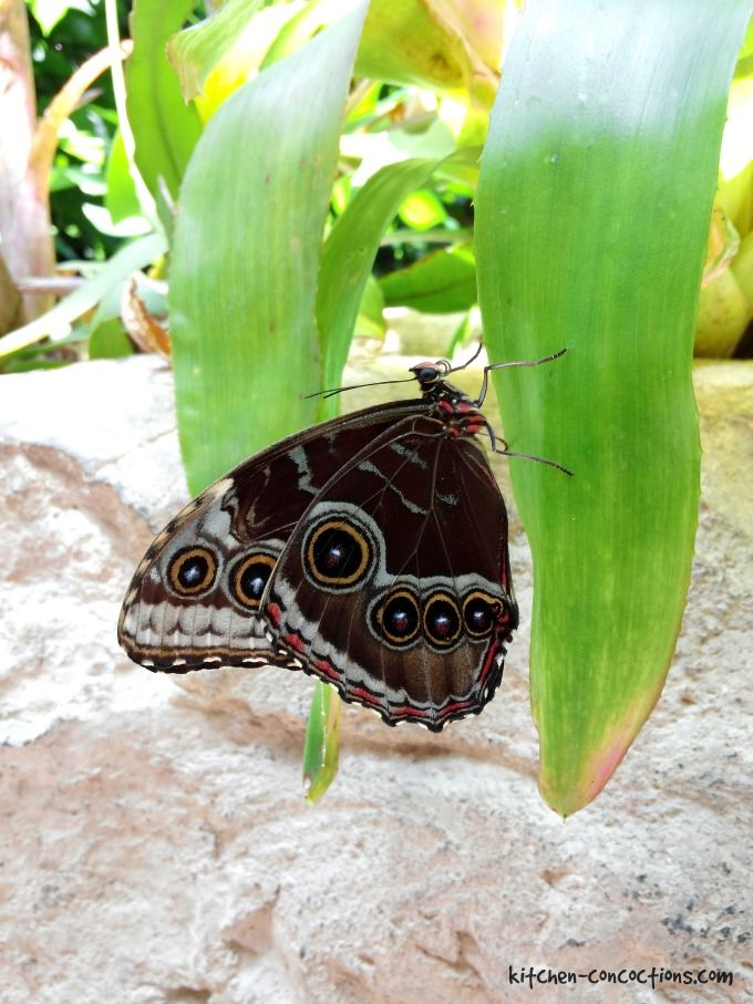 Cockrell Butterfly Center